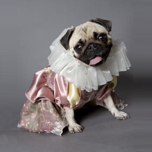 Elizabethan Dress Petenvogue
