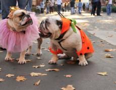5 Divalicious Ways Your Dog Can Do Halloween